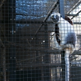 Duke Lemur Center 2016